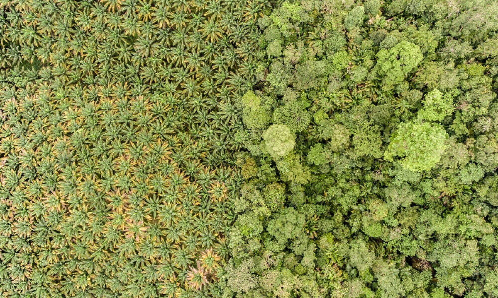 Organics Biomass